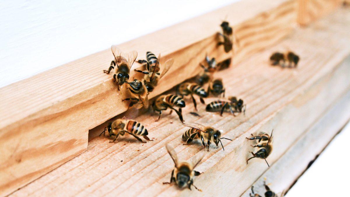 7 afectiuni care se pot trata cu pastura de albine