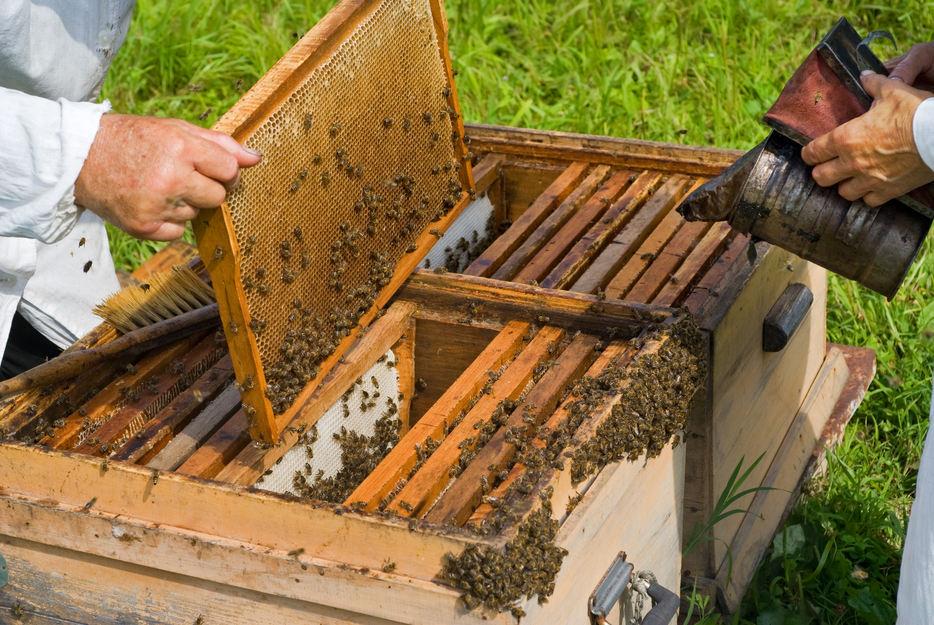 Cum este organizat un stup, ierarhia si viata albinelor